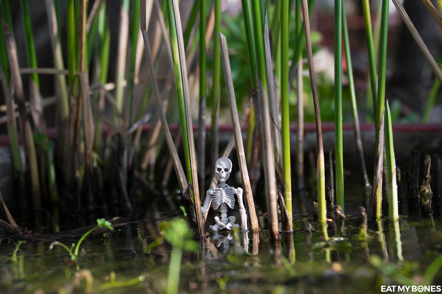 Frejus Pagoda Buddhist - Pose Skeleton - Toy photography - Miniature - Eat my Bones