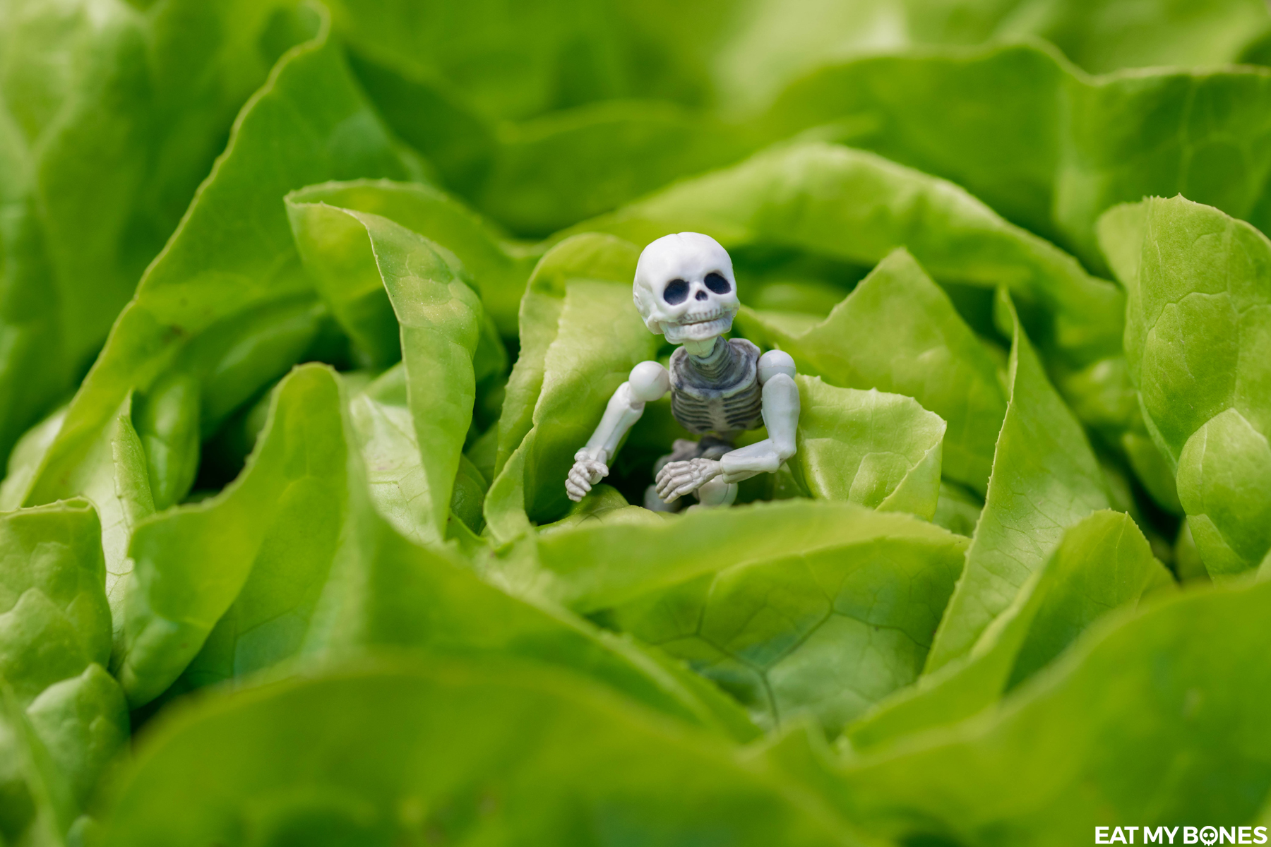 Mounette vegetable garden - Pose Skeleton - Toy photography - Miniature - Eat my Bones