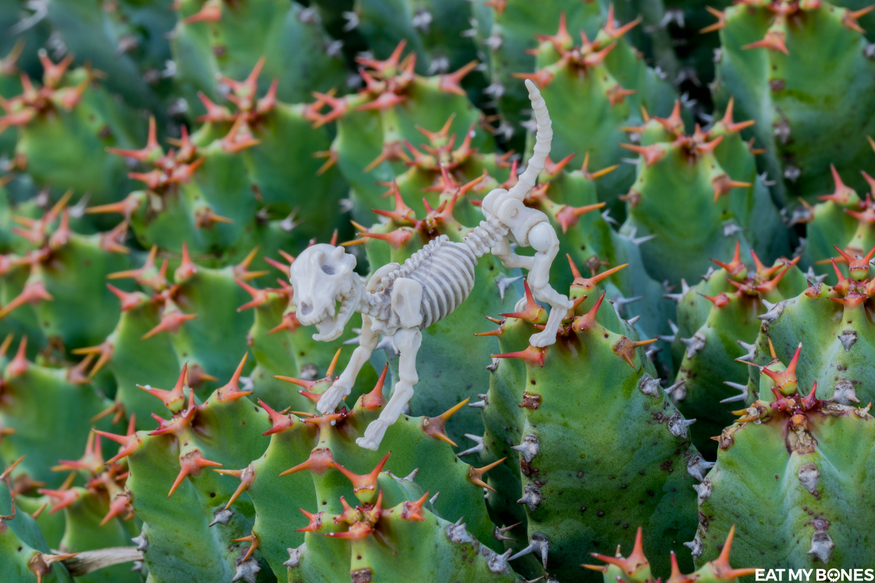Cactus! - Pose Skeleton - Toy photography - Miniature - Eat my Bones