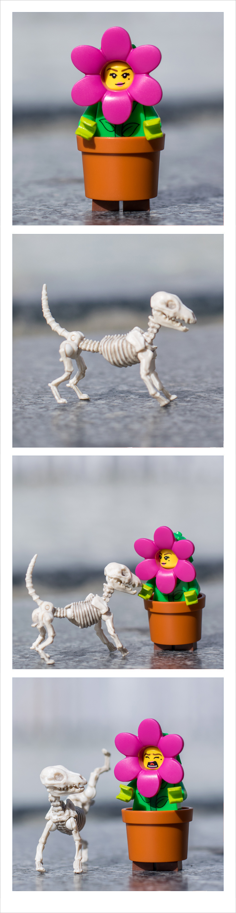 Photobooth Dog Flower - Pose Skeleton - Toy photography - Miniature - Eat my Bones